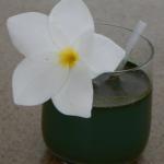 SPISOY, a refreshing Vanilla-Spirulina-Soy Drink