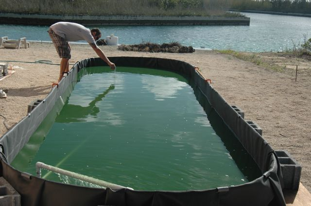 Grow spirulina at home in a small pond