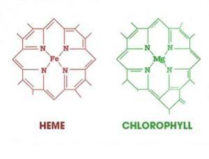 Spirulina and Heavy Metal Detox, chlorophyl heme│Spirulina Academy