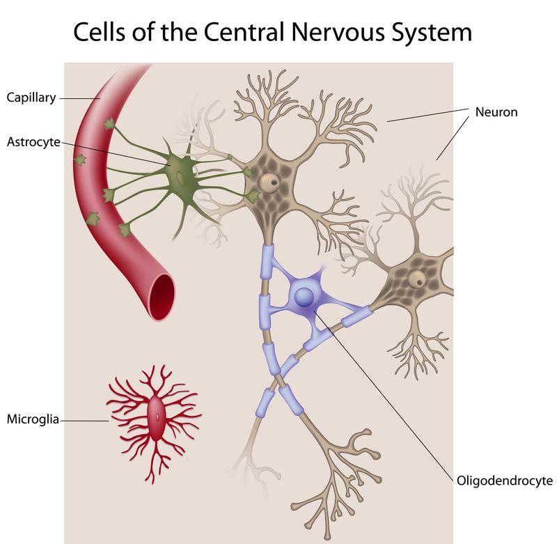 nervous system cells