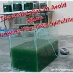 grow spirulina at home